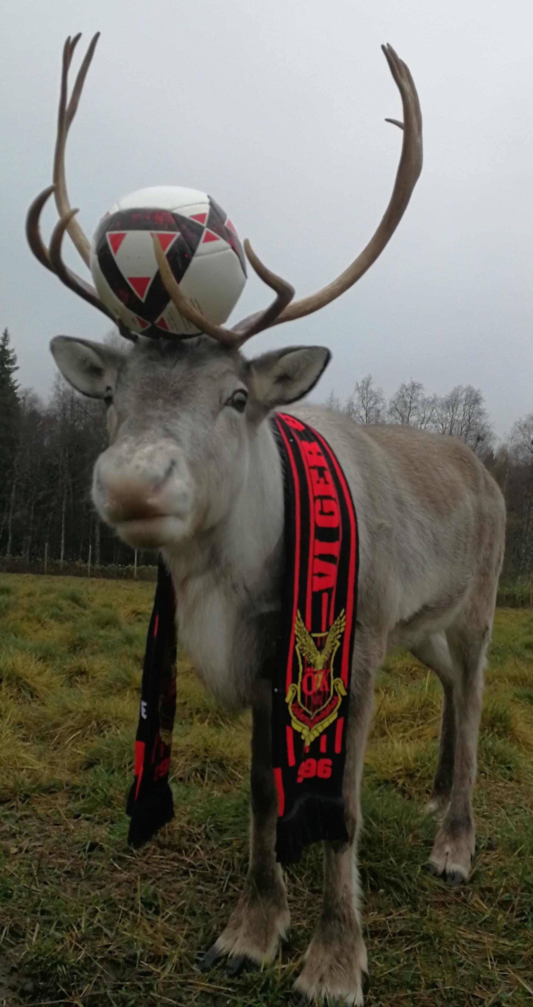 ÖFK-supportern Vide, från Renranchen.