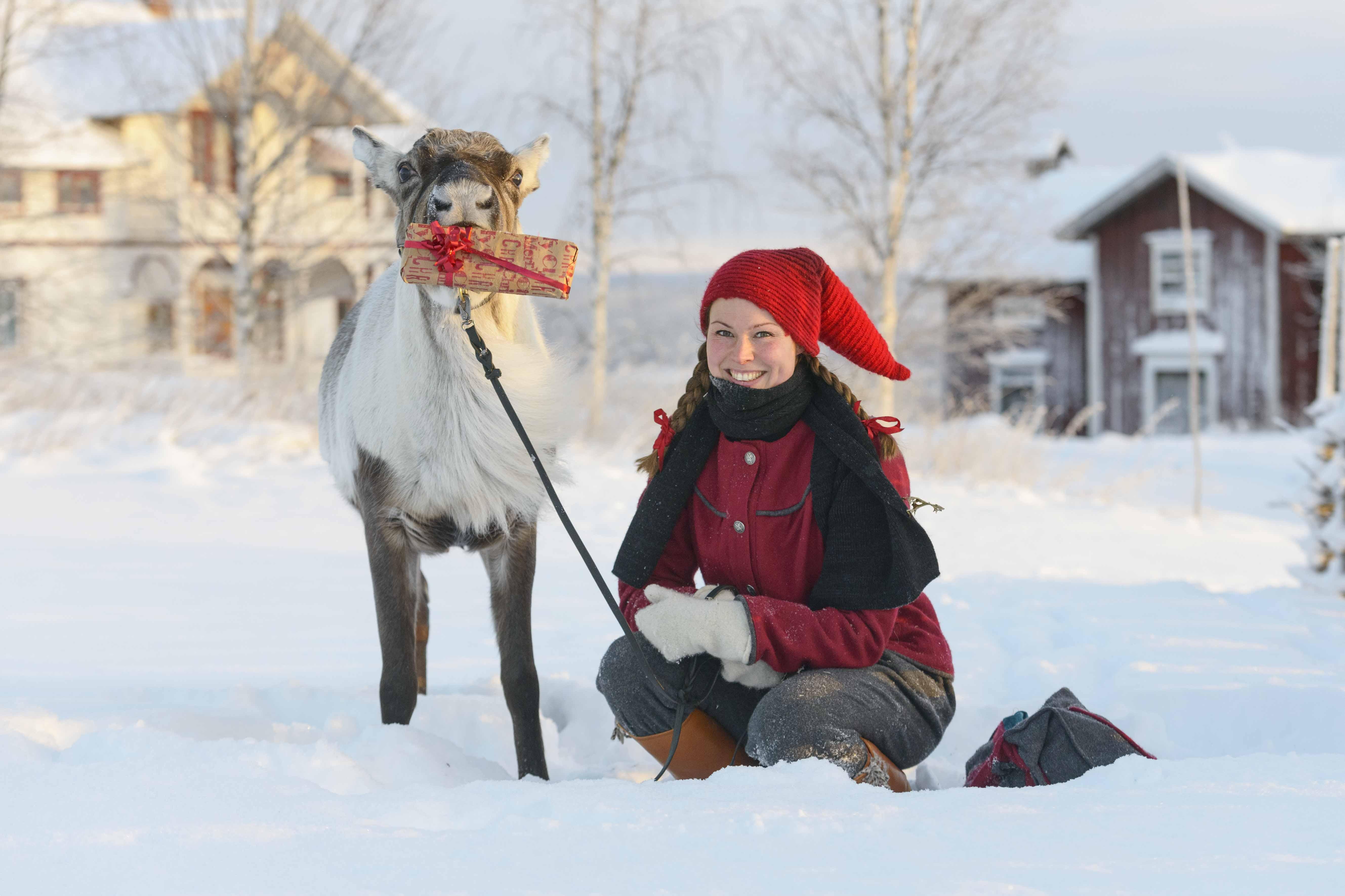 Renen Rudolf och Ullis, från Renranchen.