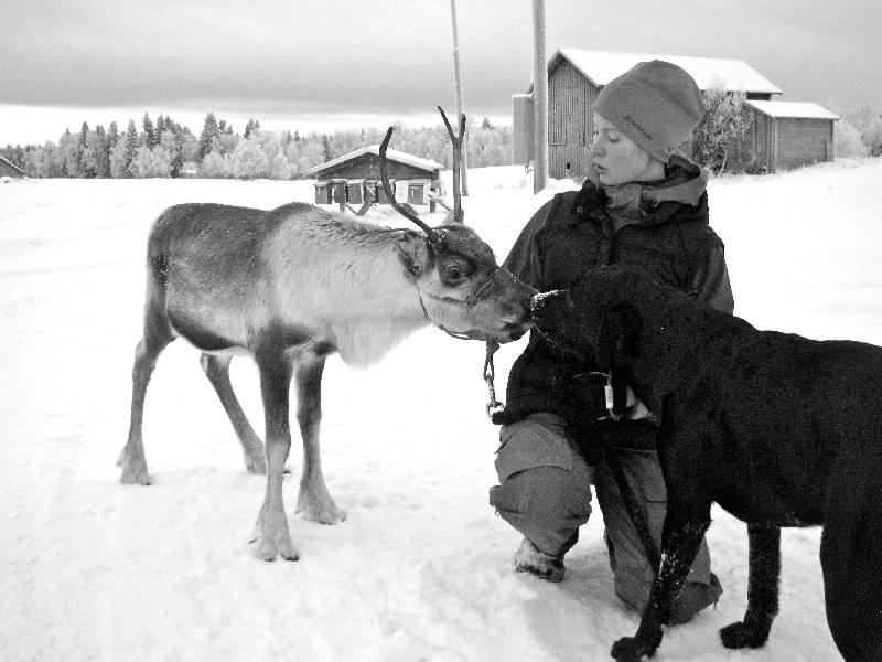 Renen Rudolf i Kluk.