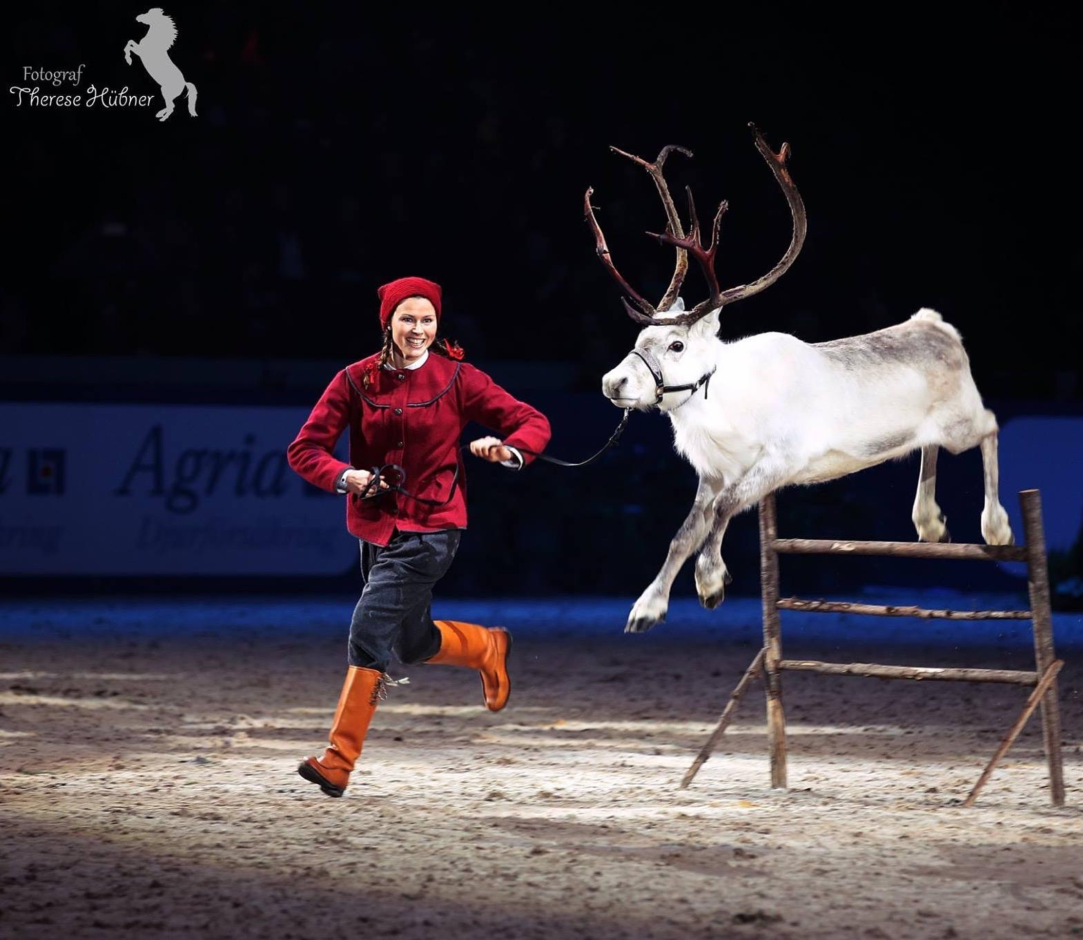 Frost från Renranchen, på Sweden Horse Show 2015