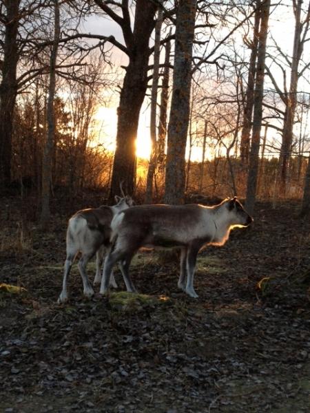 Rudolf och Dunder.
