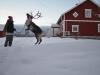 Klickerträning med renen Rudolf i Kluk.