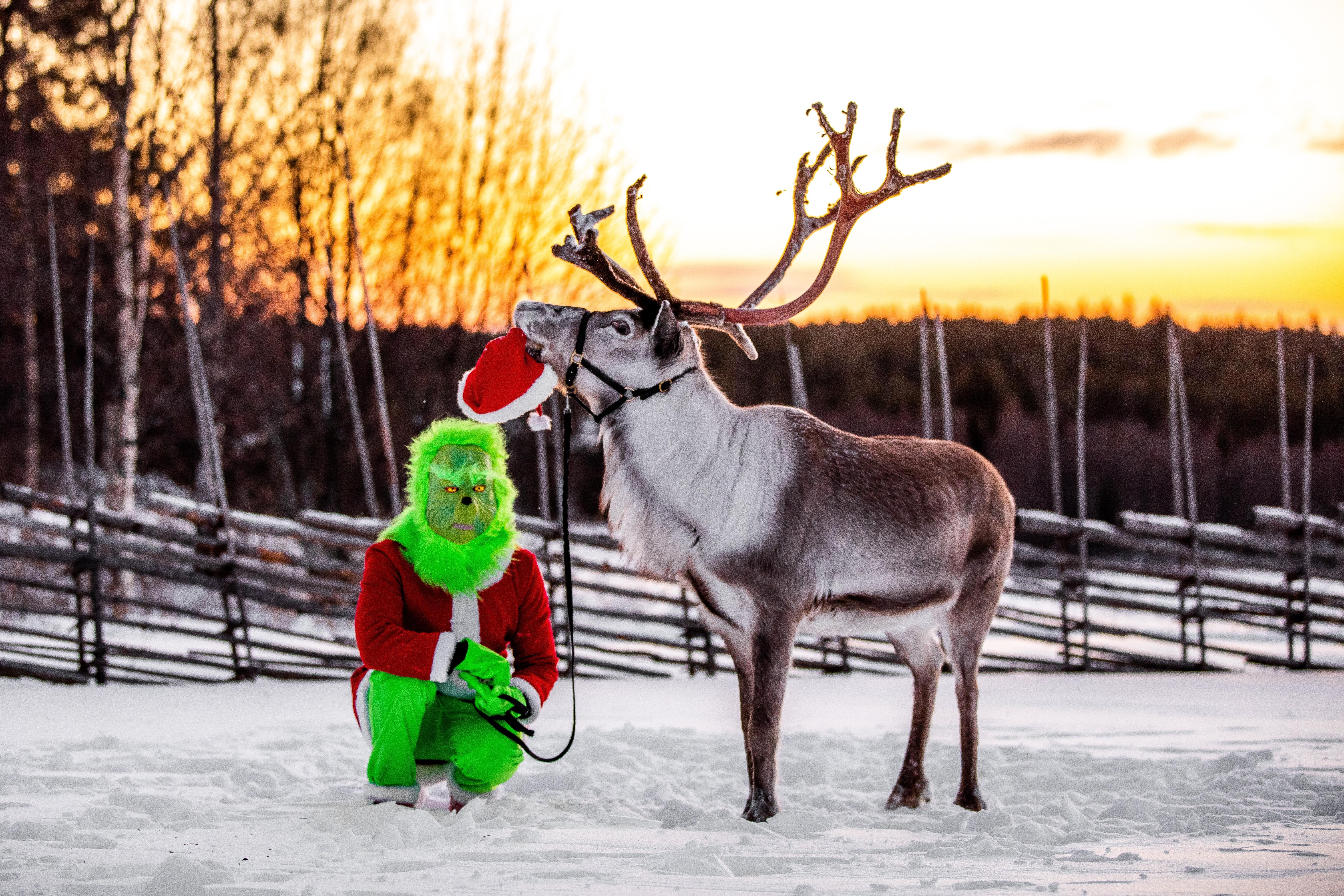grinchen-ullis-rudolf-vide-kluk-reindeer-renevent-fred-renar