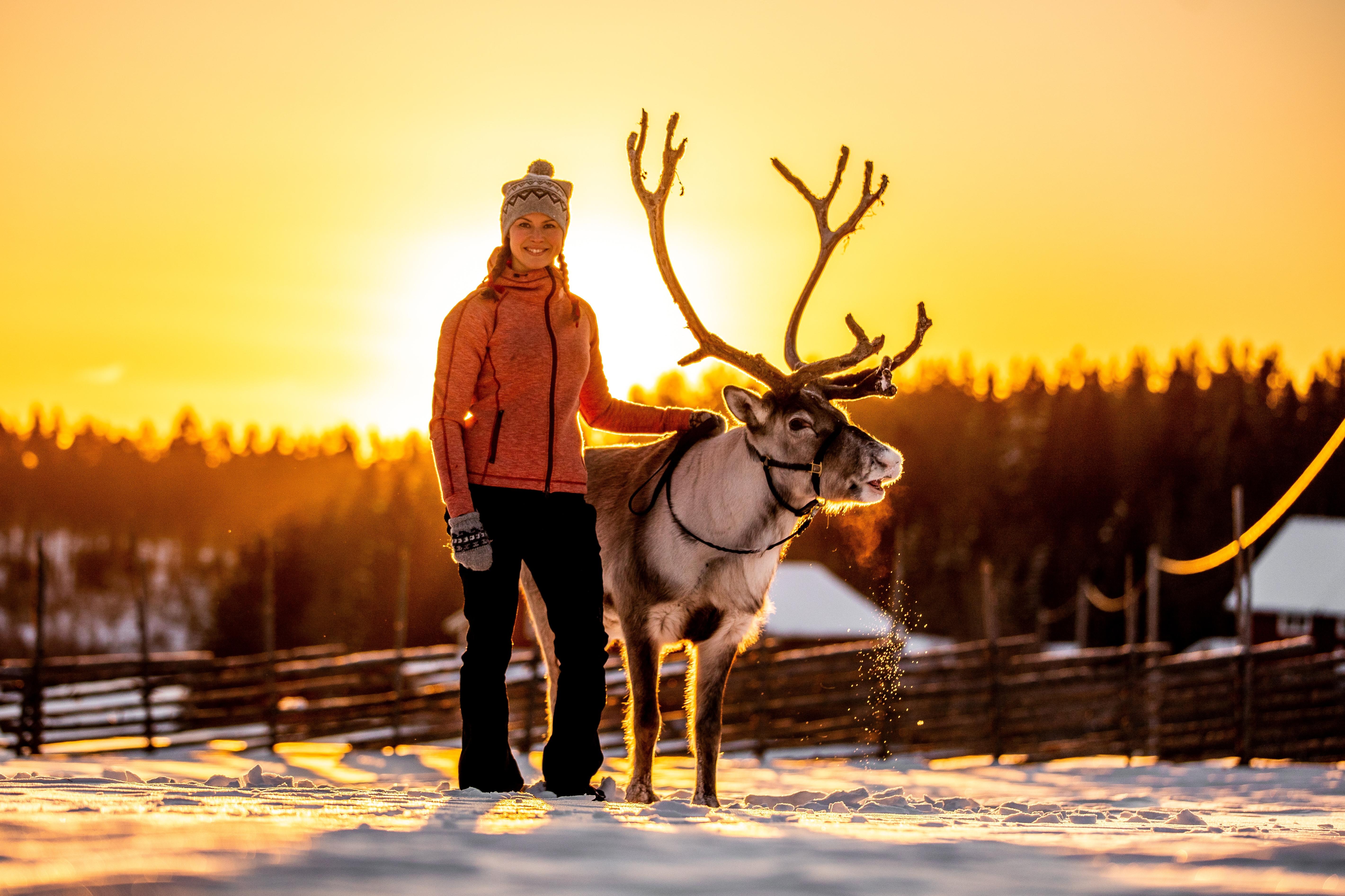vide- ullis-rudolf-renranchen-renar-reindeer