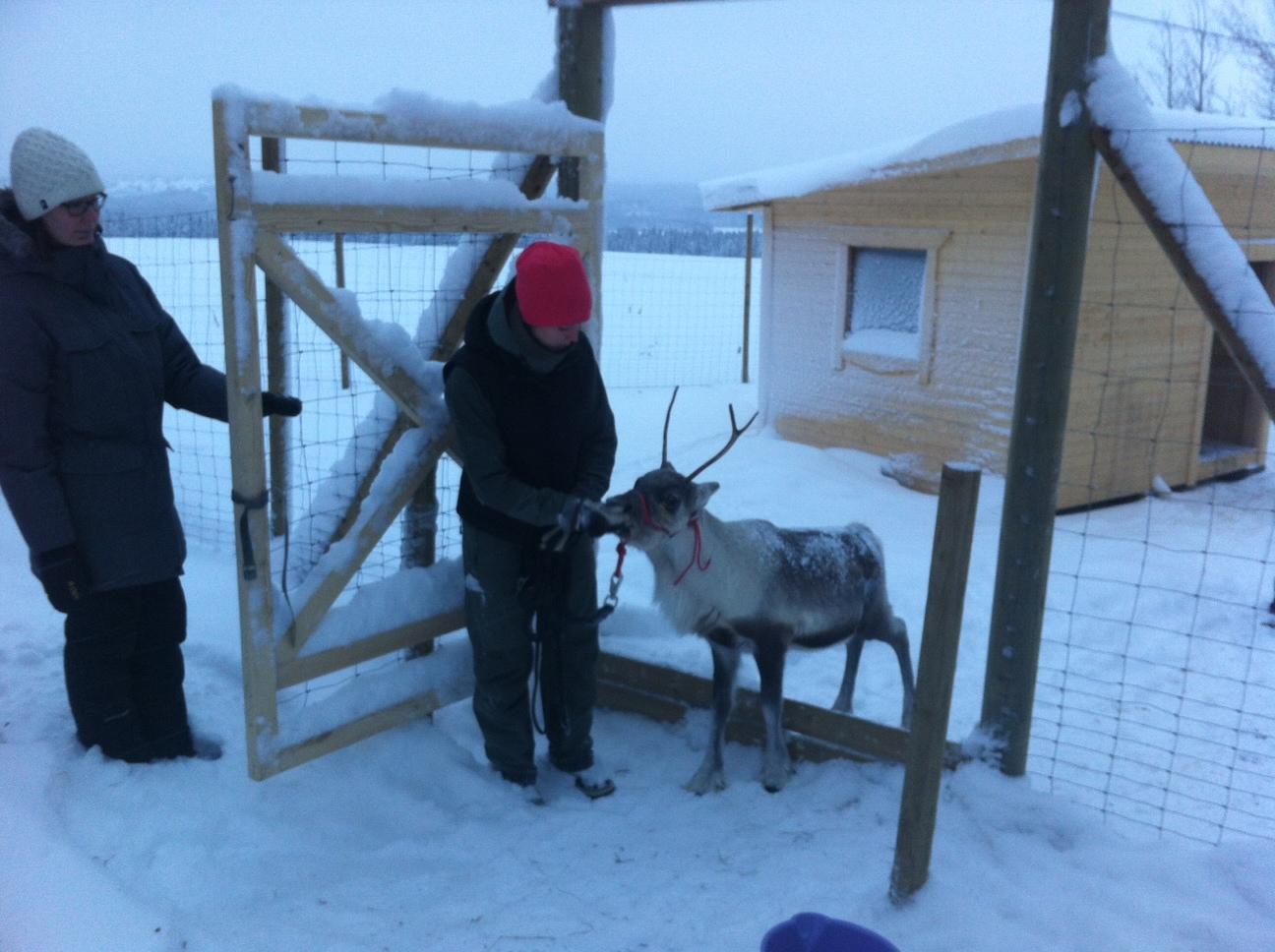 Rudolf vill inte komma ut