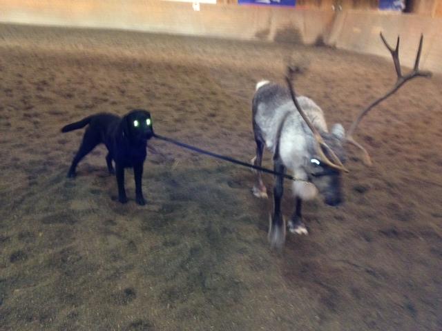 Zingo och Rudolf