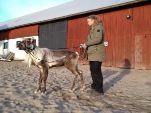 Rudolf och Moa