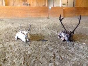 Frost & Rudolf
