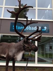 Rudolf på besök utanför Storsjöbadet efter EM i Flugfiske.