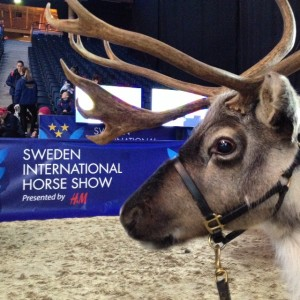 I år går Stockholm International Horse Show av stapeln på Friends Arena.