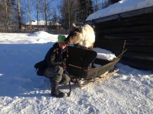 Rudolf passade på att provåka tomtesläden när vi lix var i tomteland:)
