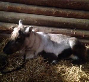 Rudolf ligger plats i ett hus i tomeland.