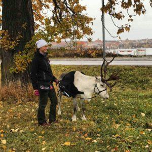 renar-frost-reindeer-renranchen-ullis-rudolf